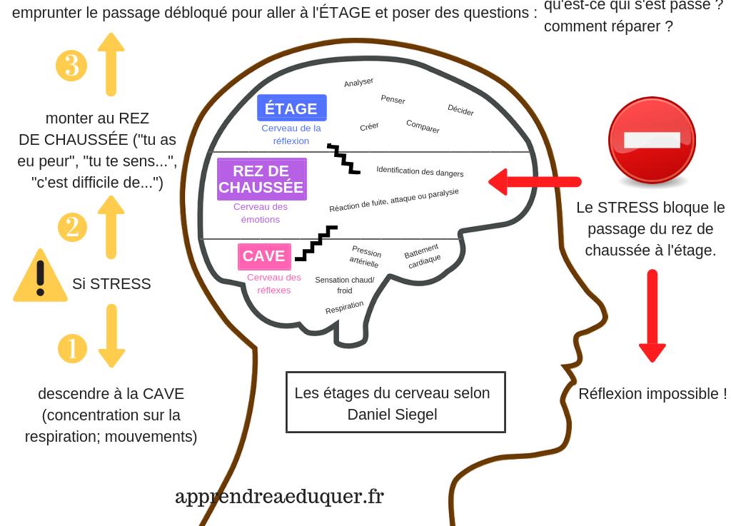 Les étages du cerveau pour mieux comprendre les réactions émotionnelles des enfants…..